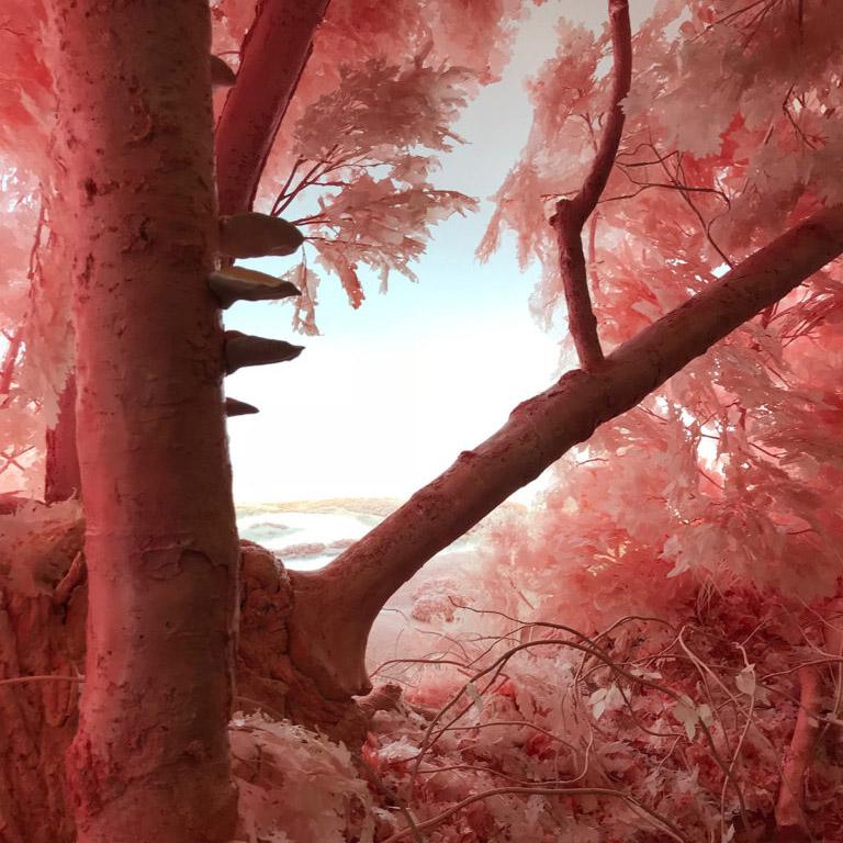 Pink-Forest-Patrick-Jacobs-quadrata