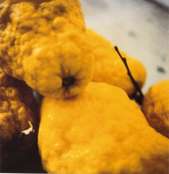 CY TWOMBLY - Lemons, Gaeta 2005