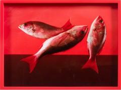 Elad Lassry, Red Snapper, 2010. C-print, 27,9x35,6 cm.