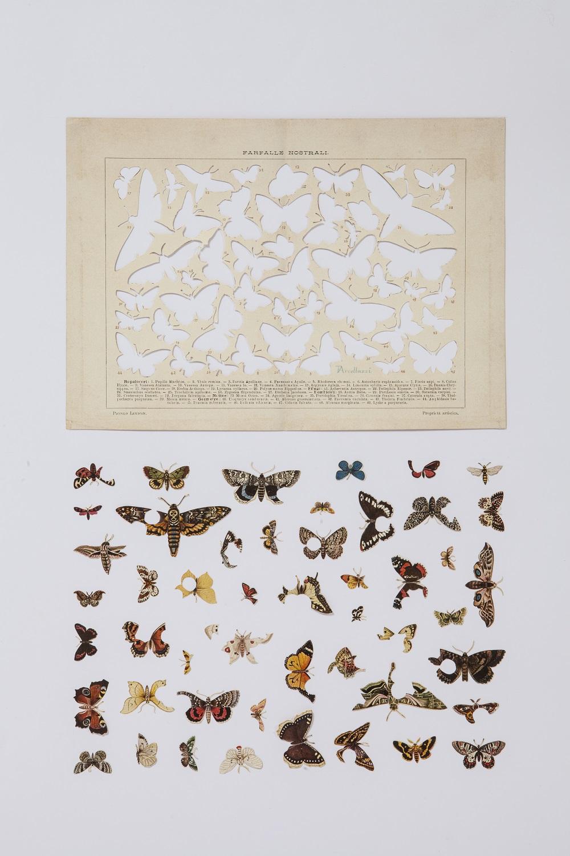 Gianluca Quaglia, Il luogo delle farfalle nostrali, 2015, intagli su tavola entomologica di fine Ottocento, 50x28cm