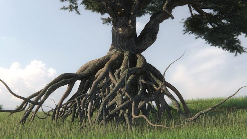 Il cedro dei cieli 2014 Still da videoanimazione 3d Courtesy dell'artista e Galleria Passaggi, Pisa