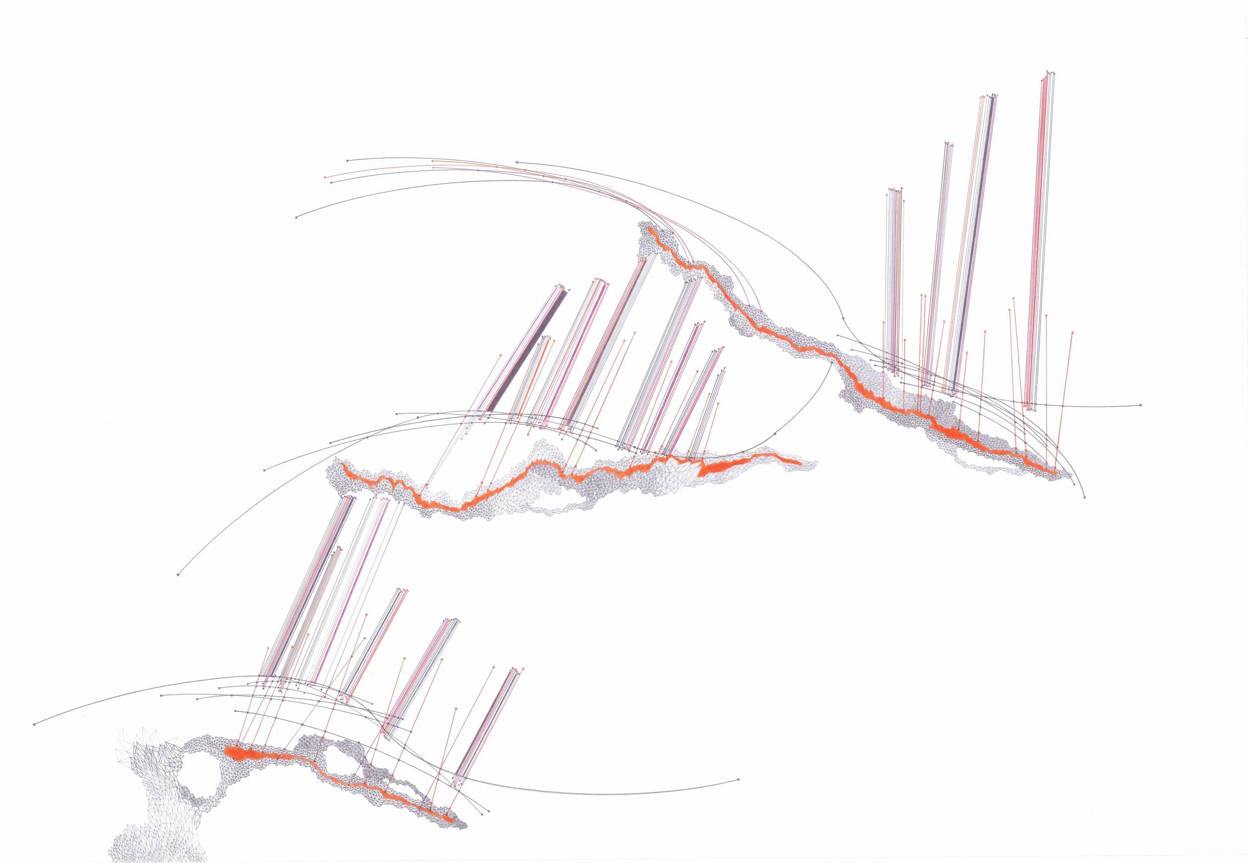 Tamara Repetto, Frattale N30, 2014 matita su carta 100x70cm (1)