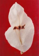 angkor.1997.cm80x55web