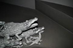 dettaglio-di-Caimano-2011